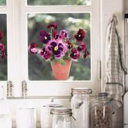 Flat Flower Raamsticker - paarse Viooltjes in een pot