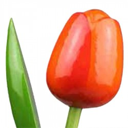 OrangeRed - Bunch Wooden Tulips