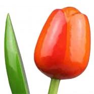 Wooden Tulips OrangeRed - Bunch Wooden Tulips