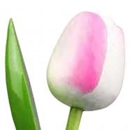 WhitePink - Bunch Wooden Tulips