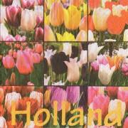 Servetten en Servethouders Tulpen Servetten - Kleur