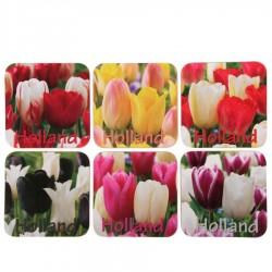 Onderzetters Tulp Holland - Kurk Onderzetters - 6 assorti