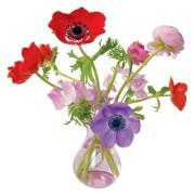 Flat Flowers - Originals Raamstickers Anemone Paars