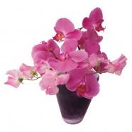 Flat Flower Raamsticker - Orchidee Paars- Roze