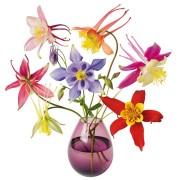 Flat Flowers - Originals Raamstickers Akelei - Aquilegia
