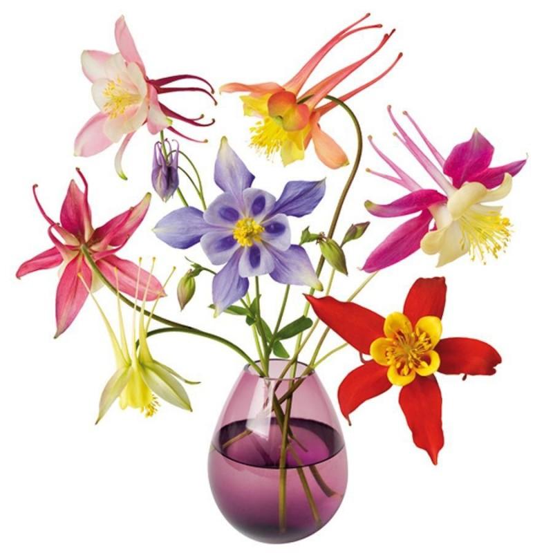 Flat Flower - Aquilegia
