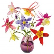 Flat Flower Raamsticker - Akelei - Aquilegia