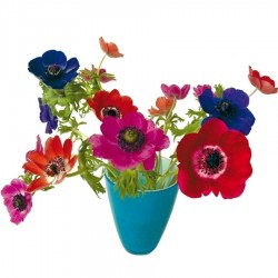 Flat Flower - Anemone Blue Red Pink