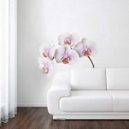 Orchidee Wit - Muursticker