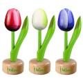 Tulp op voet